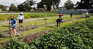 Horticultural Sciences (HS) students working garden plots at the teaching farm. Photo taken 10-09-20.