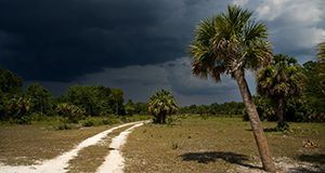 Photo of a landscape featuring a white sand road disappearing into pine trees on the horizon. Sunbleached grass and a palm tree in the foreground, bright sun contrasts with dramatically dark sky and advancing storm clouds.